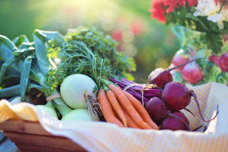 Leto a vhodná strava